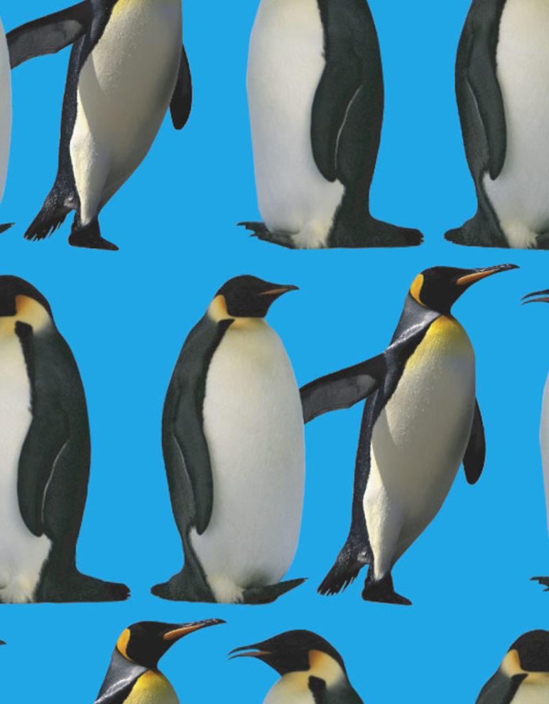 JOE.20-11 pinguino azzurro collection Joelury summer 2020